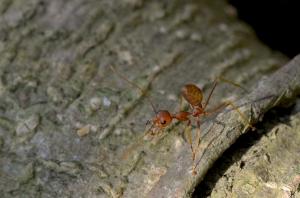 Ant at jacob Ballas Garden